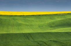 Coloreado campos verdes y amarillos debajo del cielo azul Fotos de archivo
