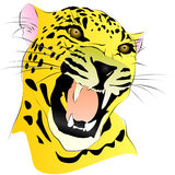 Coloreado dibujo de un leopardo sin fondo Fotos de archivo libres de regalías