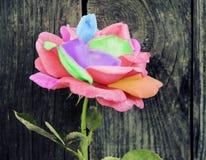 Coloreado subió en un fondo de madera foto de archivo libre de regalías
