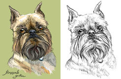 Free Colored And Black And White Brussels Griffon Dog Vector Portrait Stock Image - 94477411