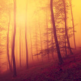 Colored autumn forest scene Royalty Free Stock Images