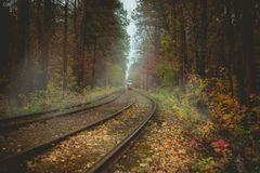Colored autumn in forest with tramway
