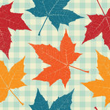 Colored autumn leaves Stock Photos