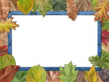 Colored autumn leaves with blue wooden picture frame stock photography