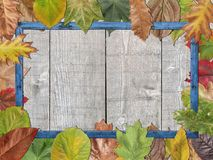 Colored autumn leaves with blue wooden picture frame royalty free stock photo