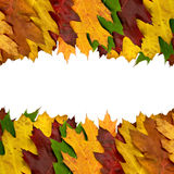 Colored autumn leaves border Royalty Free Stock Photos
