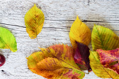 Colored autumn leaves close-up on a white wooden background. Autumn leaves close-up on a white wooden background Stock Photography