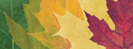 Colored autumn leaves royalty free stock image