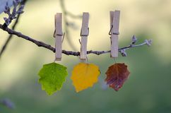 Colored autumn leaves hanging on the branch. Blurred background stock image