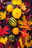Colored autumn leaves and miniature pumpkins on a gray board, fa Royalty Free Stock Photos