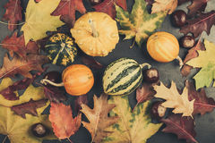 Colored autumn leaves and miniature pumpkins on a gray board, fa Stock Image