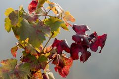 Colored autumn leaves Royalty Free Stock Photo