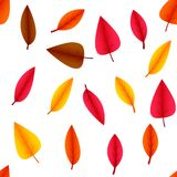 Colored autumn leaves on a white background. Vector illustration. vector illustration
