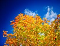 Colored autumn tree Stock Photo