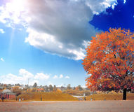 The colored autumn tree on the landscape Stock Image