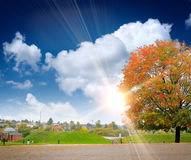 The colored autumn tree on the landscape Stock Photography