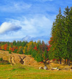 Colored autumn woods and sunny meadow Royalty Free Stock Images