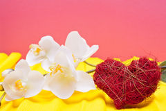 Colored background with heart and orchid Stock Photos