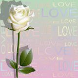 Colored background from letters 'love' and a flower of white rose Stock Photos
