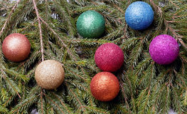 Colored balls are on the fir trees. Stock Image