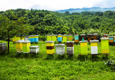 Colored bee houses on meadow in countryside of Montenegro. royalty free stock image
