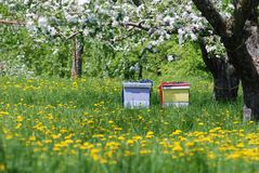 Colored Beehives under Apple Tree in Flowers. Horizontal Image of Colored Beehives under Apple Tree in Flowers stock images