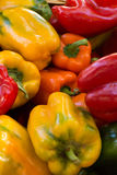 Colored bell peppers at farmer's market. Colored bell peppers on display for sale at farmer's market Royalty Free Stock Photos