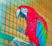 Colored big parrot Stock Images