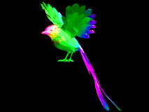 Colored bird. Cool colored bird flying in the black sky Royalty Free Stock Images