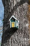 Colored Bird house in pine tree. Details of colored bird house in The famous Garden of Ninfa in the spring, Lazio, Italy stock images