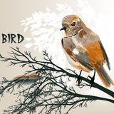 Colored bird sit on a branch tree Stock Photos