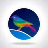 Colored bird in withe background Stock Images