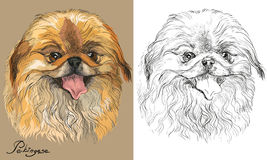 Colored and black and white Pekingese dog vector portrait. Colored Pekingese dog portrait on beige background and and black color on white background vector hand Stock Image