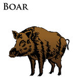 Colored boar illustration Stock Photography
