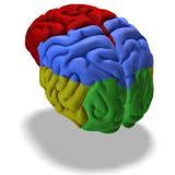 Colored brain Stock Image
