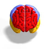 Colored brain Stock Photos