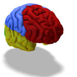 Colored brain Stock Photography
