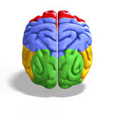 Colored brain Royalty Free Stock Photos