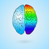 Colored brain. Colored left brain and right brain. Concept illustration. EPS10 vector royalty free illustration