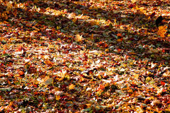 Colored bright autumn leaves on ground in morning forest Stock Image
