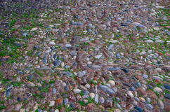 Colored brown, blue, light, dark sea pebbles laid out on the track. Herb, green-fodder, tightly, packed colored, brown, blue, light, dark, sea, pebbles, laid Royalty Free Stock Photos