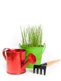 Colored buckets with grass. Three colored buckets with grass on a white background. There are rake and shovel in the foreground. Buckets made of metal Royalty Free Stock Images