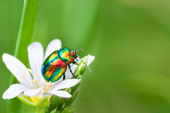 Colored bug sits on a flower Stock Photography