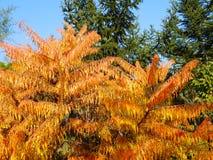 Colored bush Royalty Free Stock Photo