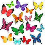 Colored butterflies. Set of different colored butterflies Stock Photography