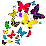 Colored butterflies background. Colored butterflies sketch on white vector illustration