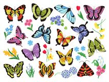Colored butterflies. Hand drawn simple collection of butterflies and flowers isolated on white background. Vector vector illustration