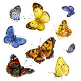 Colored butterflies set Royalty Free Stock Image