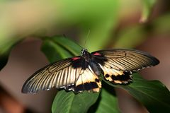 Colored butterflies with a wingspan royalty free stock photography