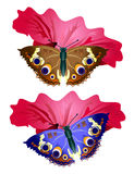 Colored butterfly Royalty Free Stock Photography